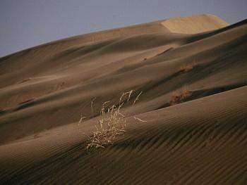 desierto2jpg