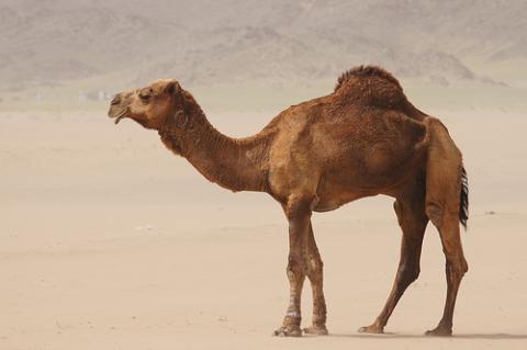 arabia-saudita-desierto.jpg