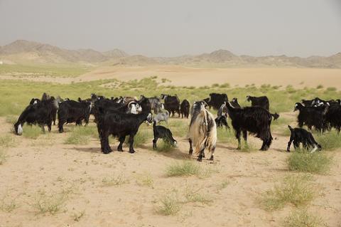 desierto-arabia.jpg